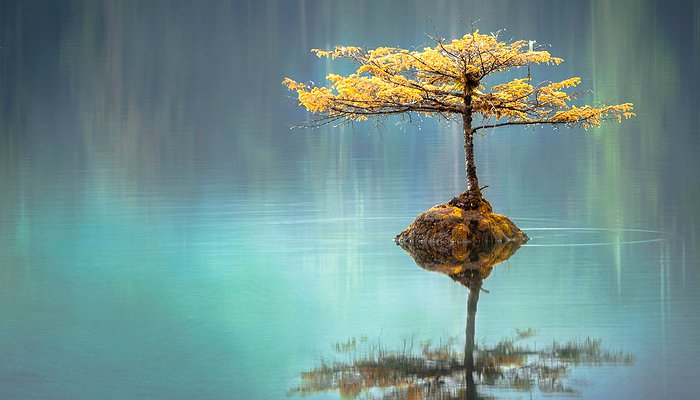 Un arbre semble pousser dans un lac avec une cascade en fond